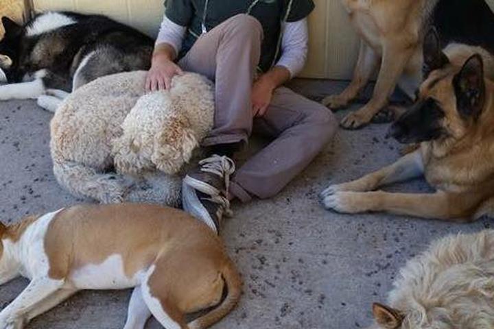 Pet Friendly Beck 'n Call Pet Services