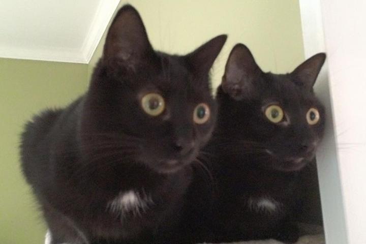 Pet Friendly Petcare Group