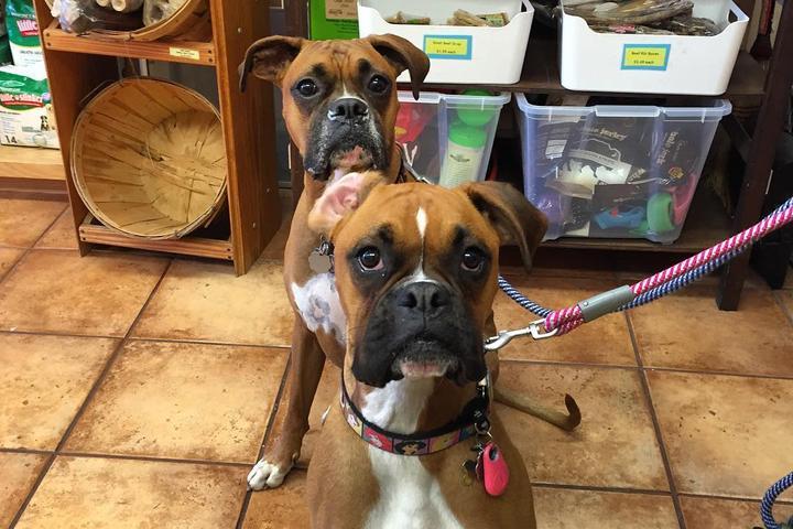 Pet Friendly Alpha Pet Care