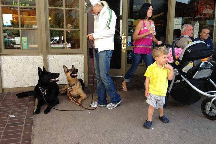 Pet Friendly L.A. School for Dogs