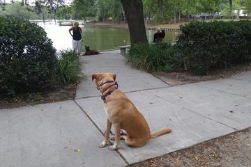 Pet Friendly Charleston Dog Wizard