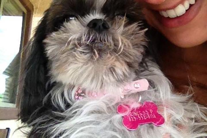 Pet Friendly Prancing Paws Dog Walking and Pet Sitting