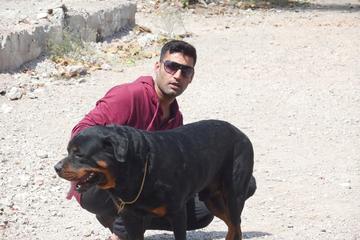 Pet Friendly Action Dogs Services Pvt. Ltd.