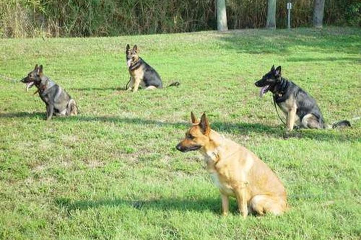 Pet Friendly Giovanna's Dog Training