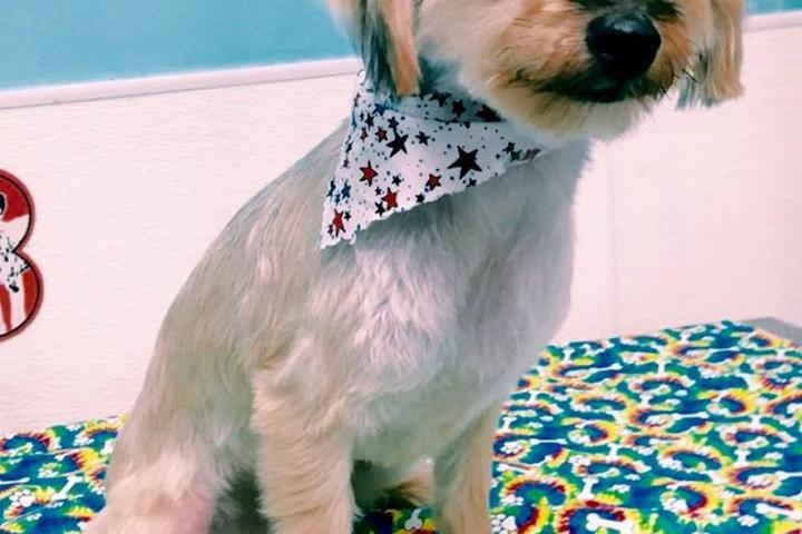 Pet Friendly Animal House Grooming & Pet Supplies
