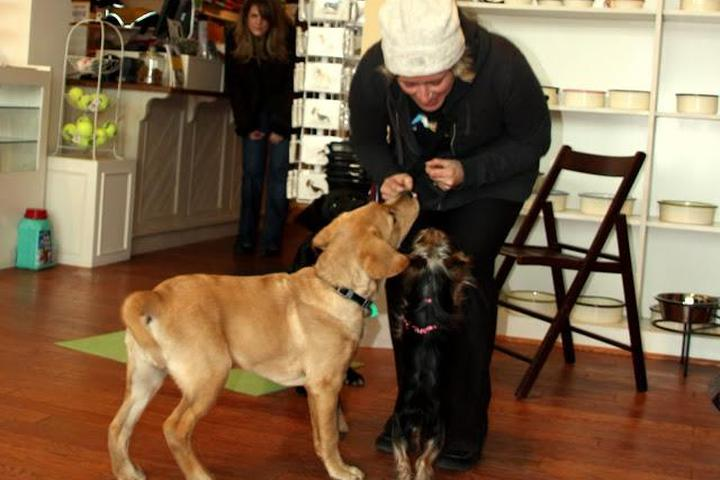 Pet Friendly Unleashed Abilities:Coaching People. Training Dogs