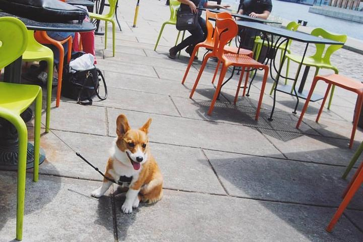 Pet Friendly Pitango Bakery + Cafe
