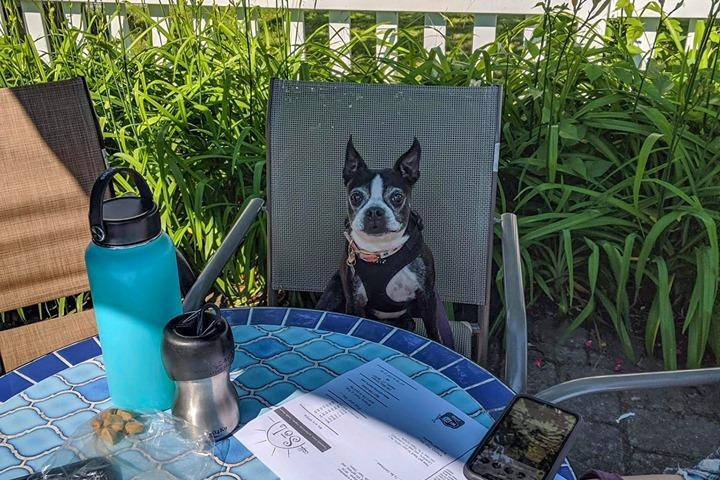 Pet Friendly Cafe Sol