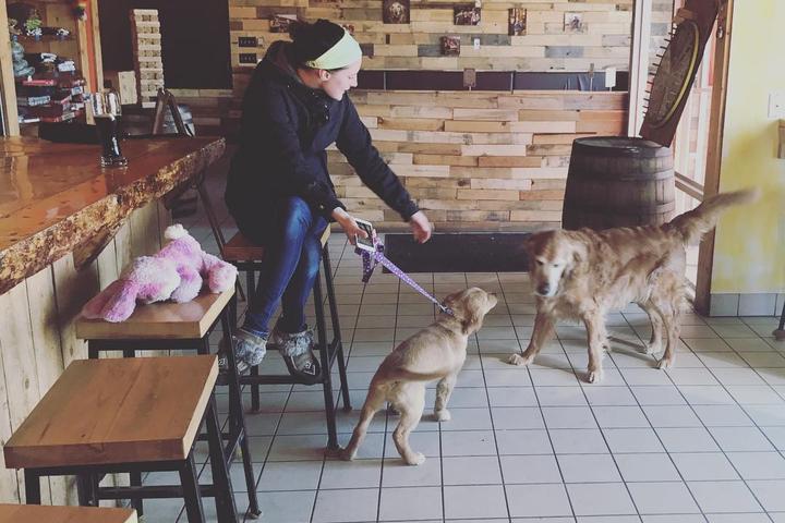 Dog Friendly Restaurants In Saskatoon Sk Bringfido