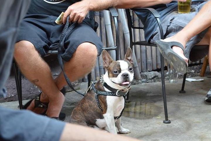 Pet Friendly Arnold's Beach Bar