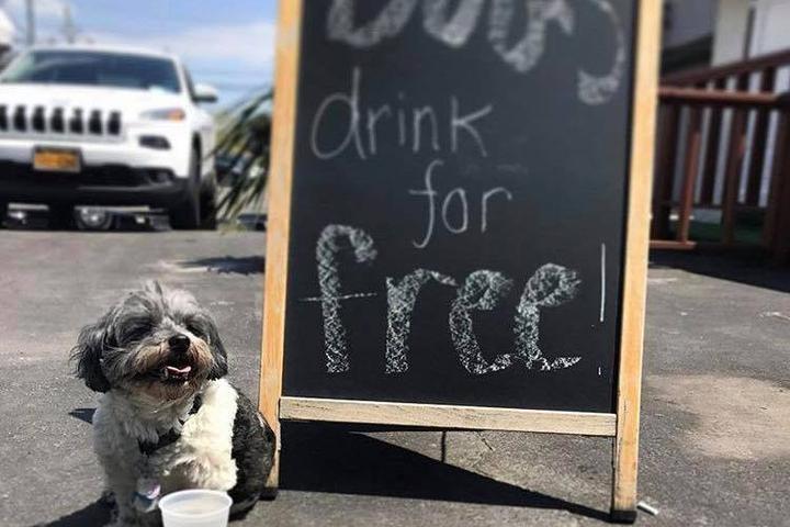 Pet Friendly Toomey's Tavern