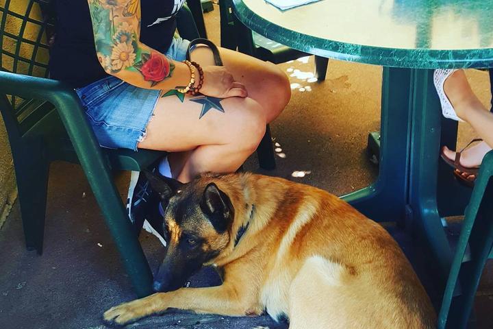 Pet Friendly Bill's Cafe
