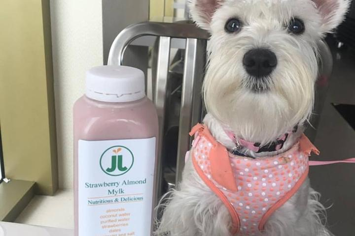 Pet Friendly Juice Journey
