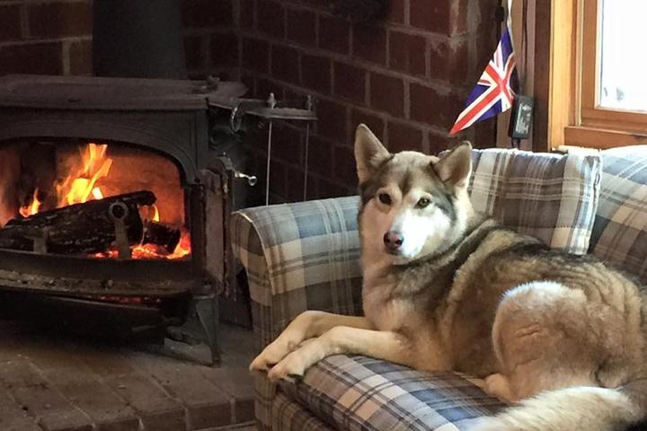 Pet Friendly Fox & Parrot Tavern