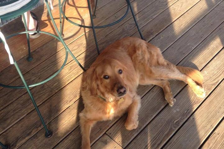 Dog Friendly Restaurants In Warrenton Mo Bring Fido