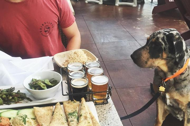 Pet Friendly Lazy Dog Restaurant & Bar