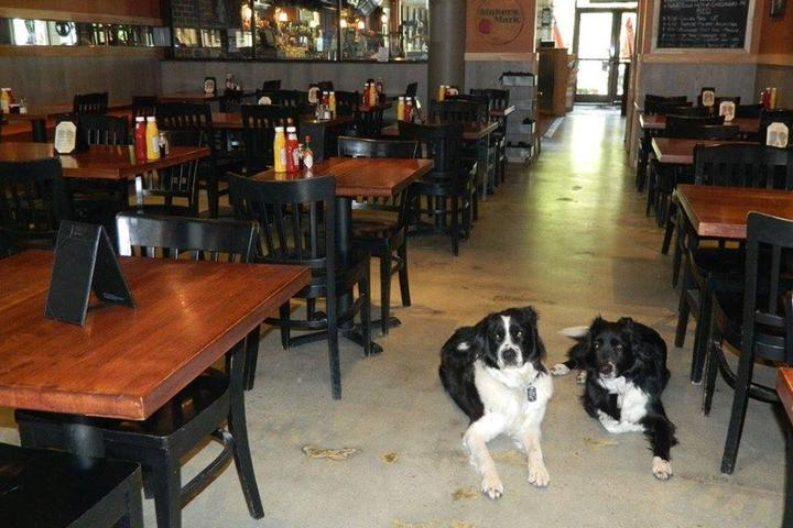 Pet Friendly Collie's Sports Bar and Grill