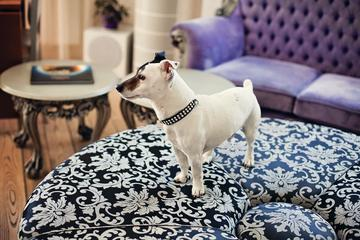 Pet Friendly Boutique Hotel & Restaurant MaMa