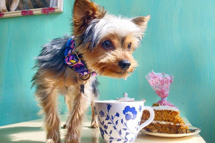 Pet Friendly Le Doggy Café