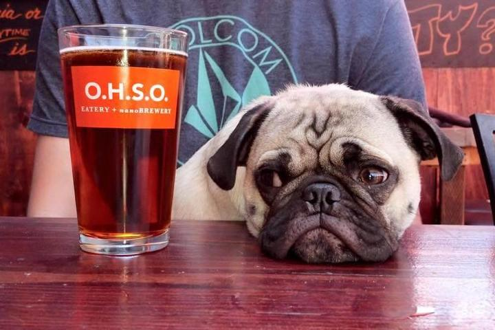 Pet Friendly OHSO Brewery Paradise Valley