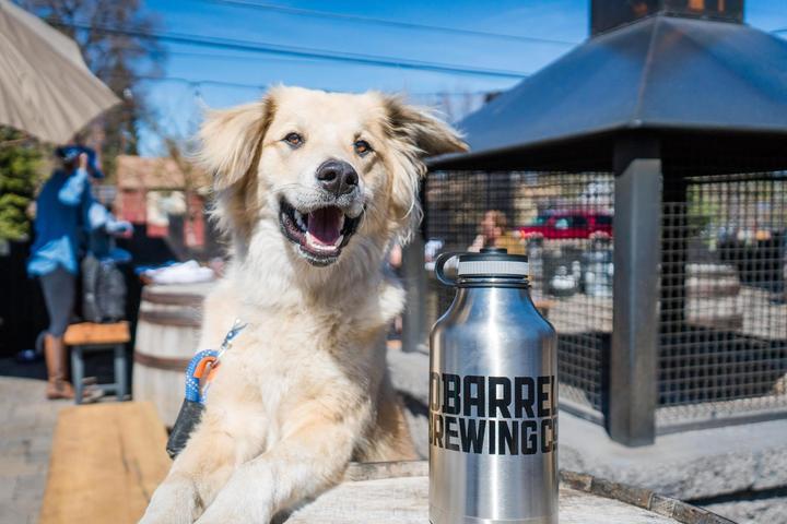 Pet Friendly 10 Barrel Brewing