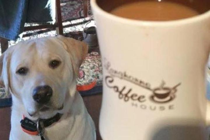 Pet Friendly Langhorne Coffee House