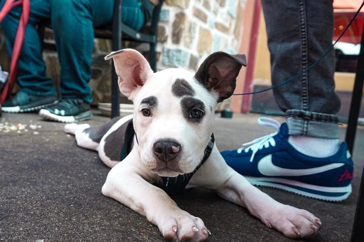 Pet Friendly Lazy Dog Restaurant & Bar