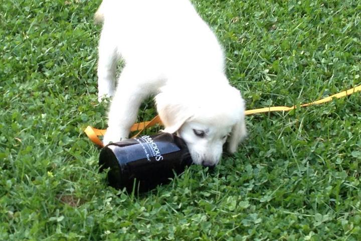 Pet Friendly Veracious Brewing