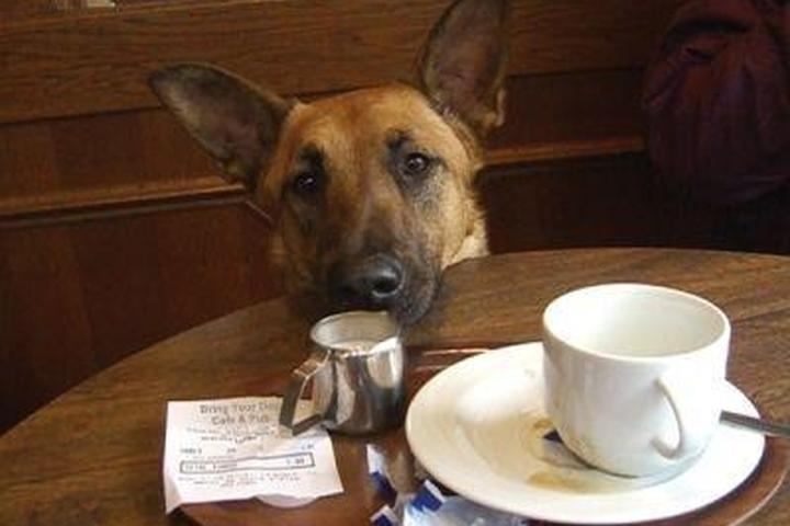 Pet Friendly Bring Your Dog Cafe and Pub