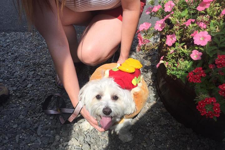 Pet Friendly Hot Dog Caboose