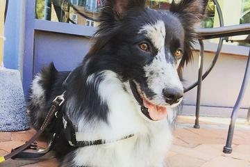 Pet Friendly Doner Bistro