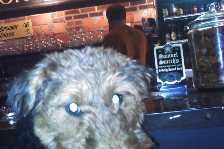 Dog Friendly Restaurants In Sioux Falls Sd Bring Fido