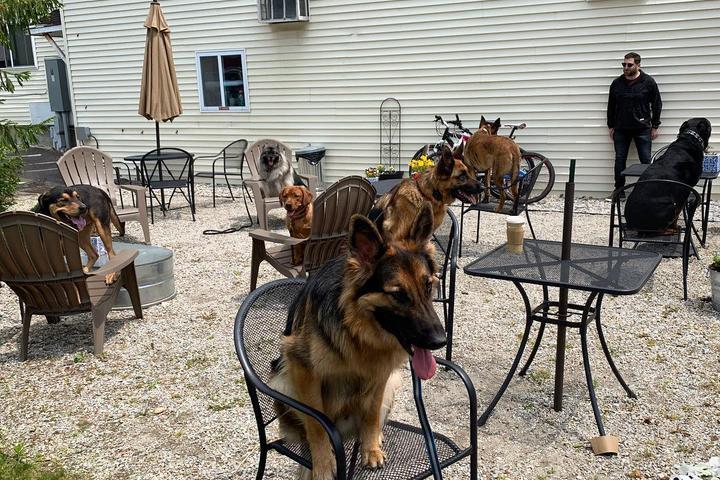 Pet Friendly The Grind Rail Trail Cafe