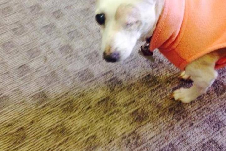 Dog Friendly Restaurants In Chevy Chase Md Bring Fido