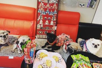 Pet Friendly Pug Cafe Living Room