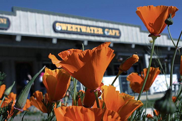 Pet Friendly Sweetwater Cafe