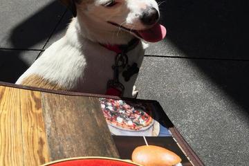Pet Friendly Lazy Dog Cafe