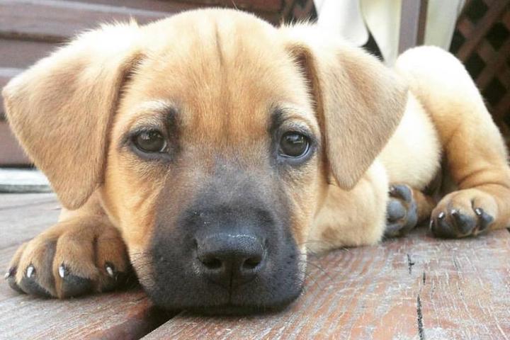 Dog Friendly Restaurants In Apex Nc Bring Fido