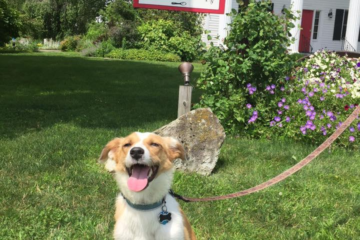 Dog Friendly Restaurants In Brattleboro Vt Bring Fido