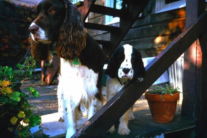 Dog Friendly Restaurants In Castleton On Hudson Ny Bring Fido