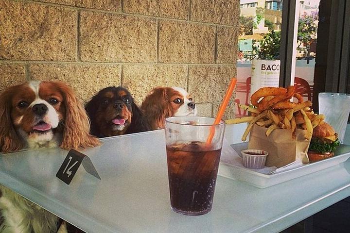 Dog Friendly Restaurants In Aurora Il Bring Fido