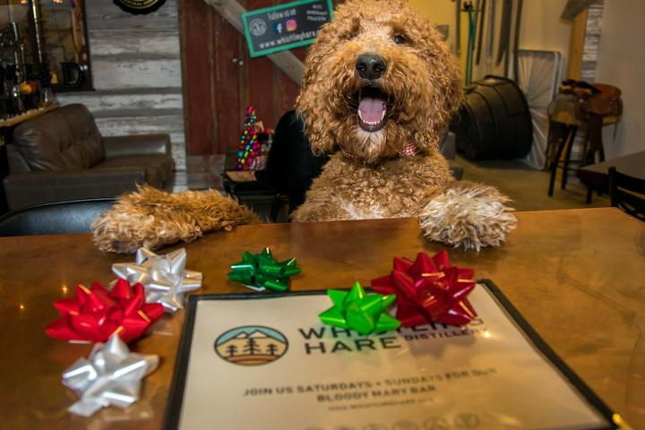 Pet Friendly Whistling Hare Distillery