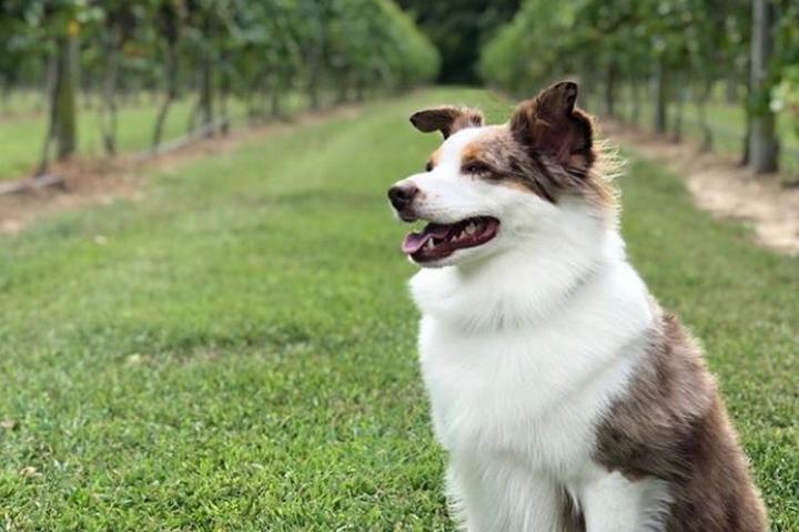 Pet Friendly Willow Creek Winery & Farm