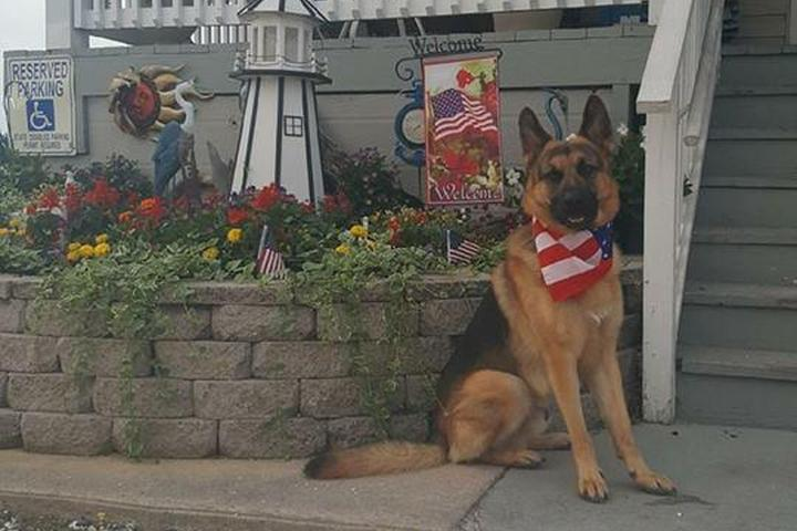 Pet Friendly Dockside Cafe