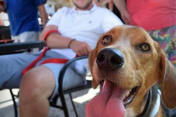 Dog Friendly Restaurants In Milwaukee Wi Bringfido