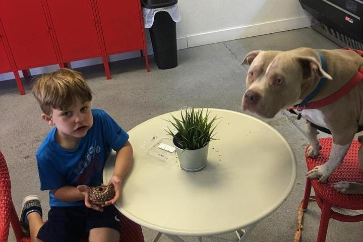 Pet Friendly Dogs-N-Donuts