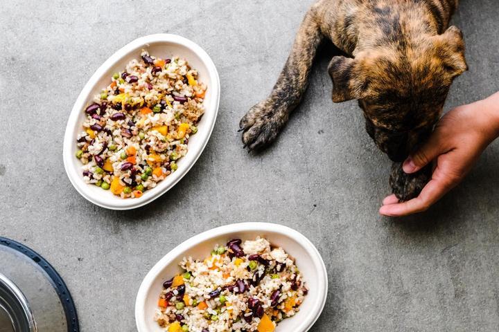 Pet Friendly Braxton's Kitchen