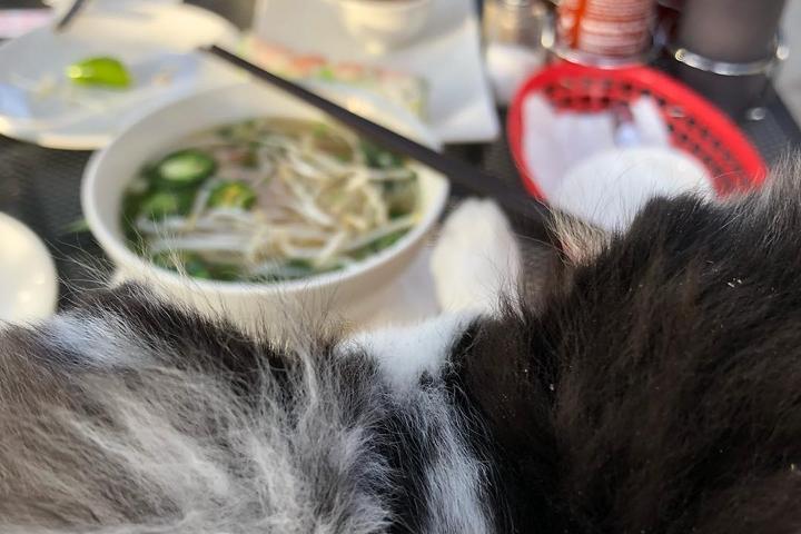 Pet Friendly Ha Long Bay Pho and Grill