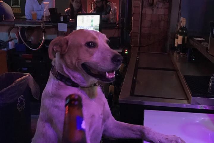 Pet Friendly Watershed Bar