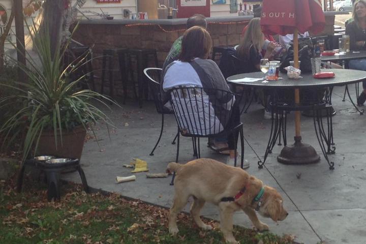 Pet Friendly Park Tavern